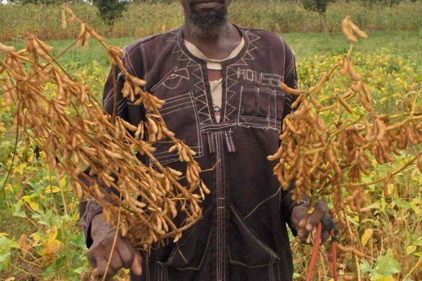 AP2-2-Récolte de soja à Guéléba