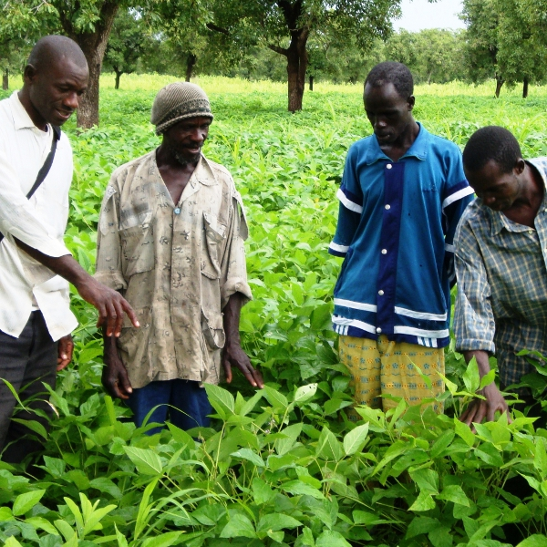 Bilan du projet pour appuyer les producteurs.trices de soja