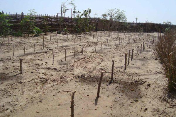 AP3-2-préparation des sols et aménagement des clotures juin 2011 VP