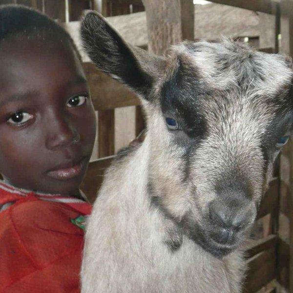 Proposer le microcrédit en animal