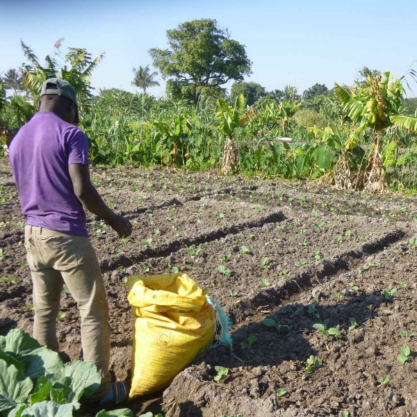 Development of a sustainable market gardening sector