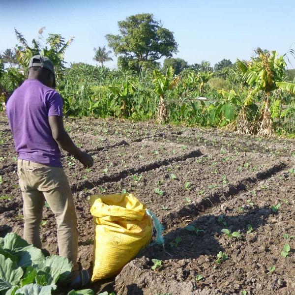 Créer une filière de légumes agroécologique