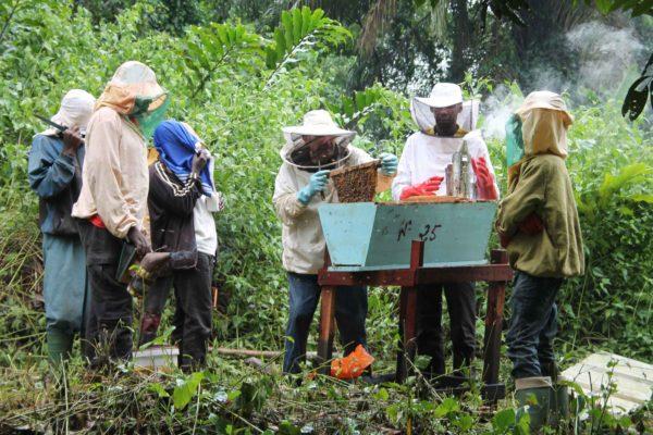 AP7-b-2017 02 Mboua Visite d'une ruche