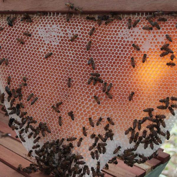 Professionnaliser les pratiques apicoles