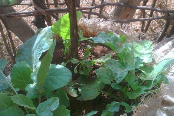 AP8-3-ELLEBORR_FARMING BAGS_3