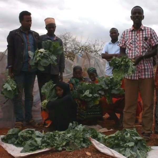 Beneficiaries tell us about their harvest