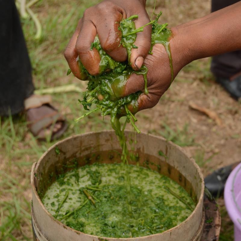 Valoriser les plantes de brousse